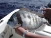poissons_011