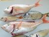 poissons_028